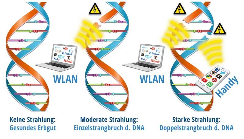 Schädigung der DNA durch Mobilfunk-Strahlung