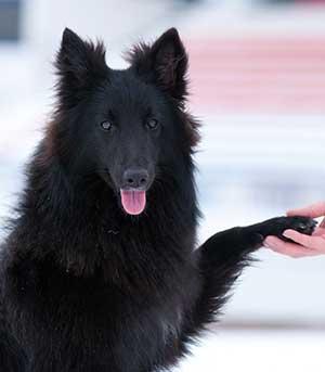 Ein Hund gibt Pfote