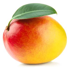 Eine reife Mango-Frucht